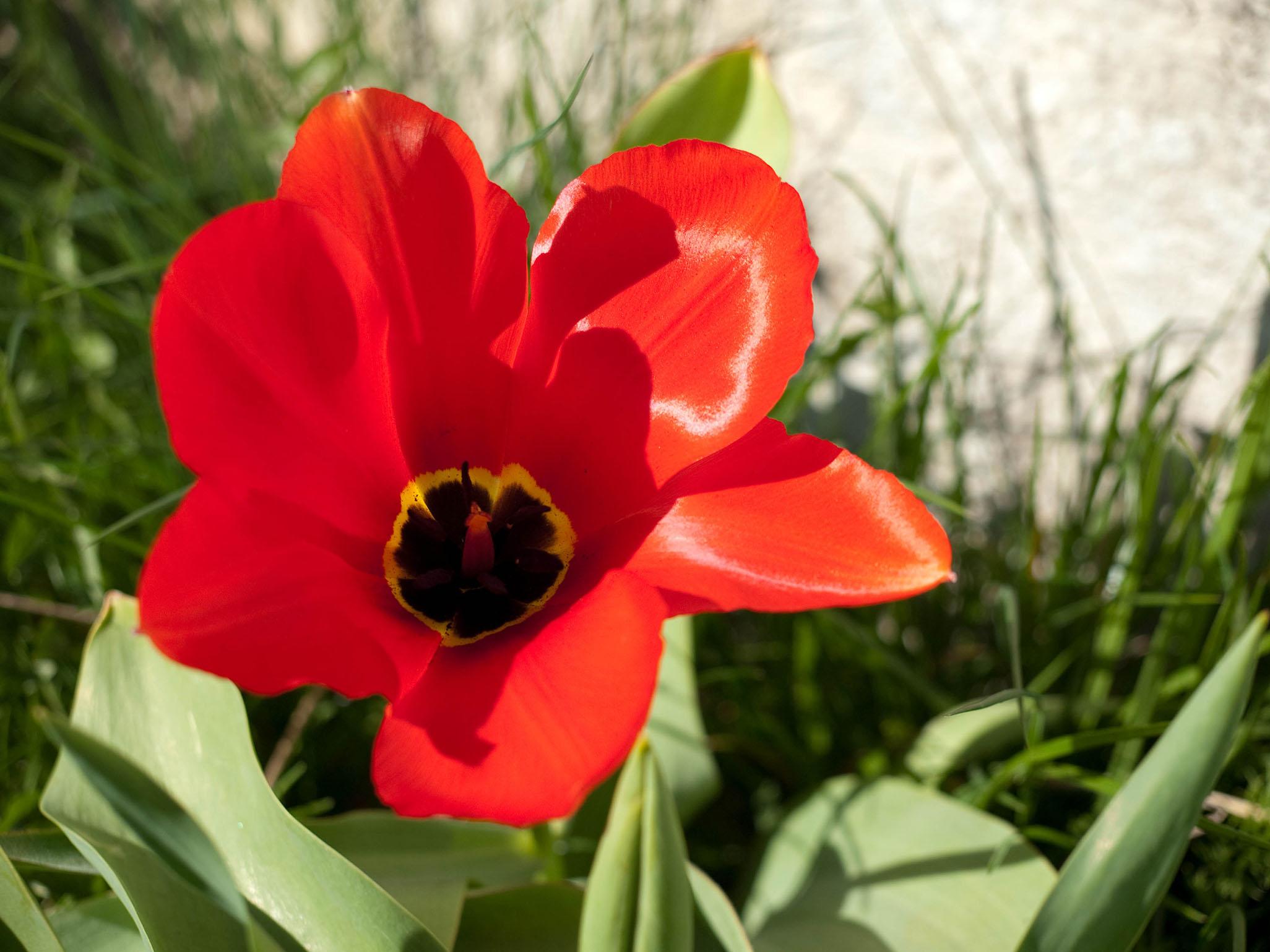 Blommor och bin…i alla fall blommor