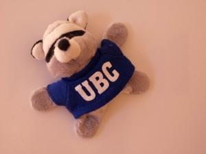 UBC racoon
