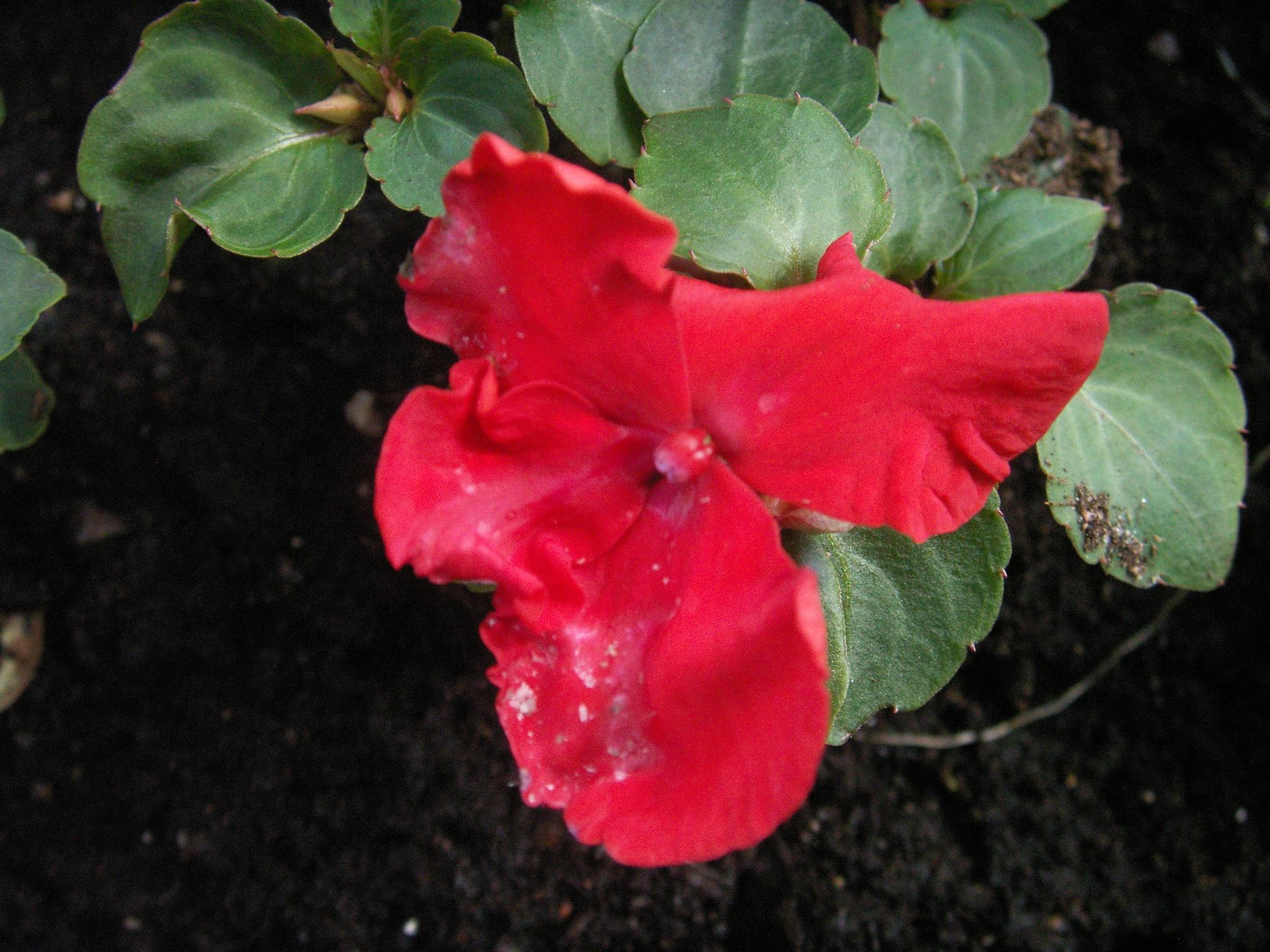 En ny blomma