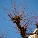 Spretigt träd