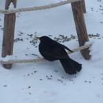 Vinterfågel 2