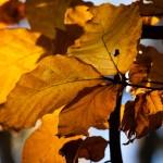 Tätt inpå hösten