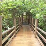 Grönskande bro