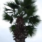 Palm från grodperspektiv