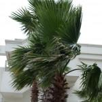 Palm i vinden