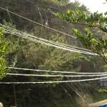 Spindelväv i solen