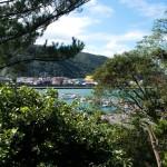 Havet från Sakaes trädgård