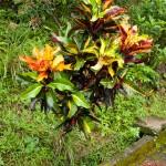 Färgglad buske