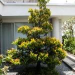 Ett av två besök på väveri: inomhusträd
