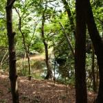 Andra väveribesöket: tät skog