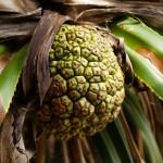 Palmfrukt som ser ut som ananas