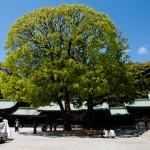 Stort träd innanför templets murar