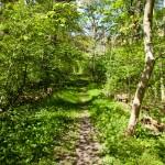 Grön stig