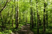 Grönska i Dalby Söderskog