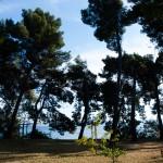 Höga träd med havet som bakgrund