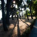 Höga träd längs strandpromenaden