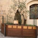 Olivträd planterat till minne av de omkomna i bombattentatet