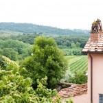 Utsikt över vinrankor och en del av vingården