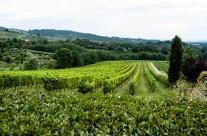 Colle Verde Vineyards